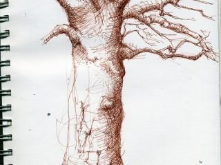 "Image: C Steele ""Emily's Tree"" (CC BY-NC 2.0)"